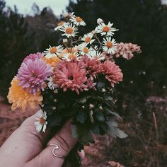 (Open rp) Sage heads outside to pick flowers to decorate her room with. So busy picking flowers and day dreaming she doesn't notice your character.