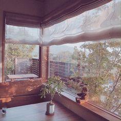 Tommyさんの、リビング,観葉植物,ダイニング,カーテン,FIX窓,ダブルシェードカーテン,無垢板テーブル,無地派,のお部屋写真