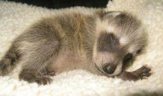 Sleep. Omg your adorable!