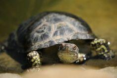 Tortoise http://petinfogalore.com