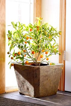 As much as we enjoy our houseplants for their pretty leaves alone, it can feel like a truly momentous occasion when flowers appear. Here are some of our favorites for adding extra color and even fragrance to our indoor gardens. #houseplants #indoorgardening #bloominghouseplants #beautifulhouseplants #bhg Flowering House Plants, Garden Plants, Indoor Flowers, Indoor Plants, Diy Garden, Garden Ideas, Container Gardening, Indoor Gardening, Plant Decor