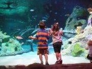 Enjoy Discounted Admission on Toddler Tuesday Dallas, TX #Kids #Events