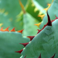 Abstract Agave Colors Fine Art Photography