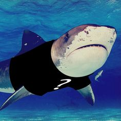 Check out our blog about fundraising for shark conservation. We'll be posting the t-shirt design soon!
