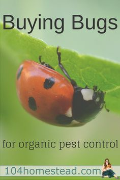 One of the best organic pest control techniques involves making your property an ideal environment for beneficial bugs. Did you know you can buy beneficial bugs?