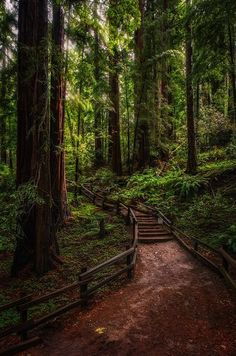 "silvaris: "" The Enchanted Forest by Justin Brown """