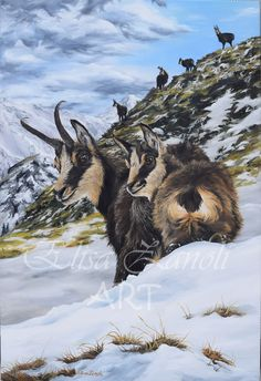 Camosci sulla neve - Dipinto ad olio Chamois in the snow - Oil painting by Elisa Zanoli