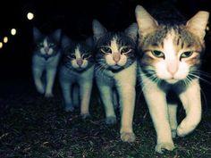 marching kitties