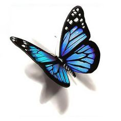 Blue 3D Butterfly Tattoo Design