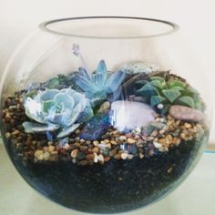 A little succulent terrarium