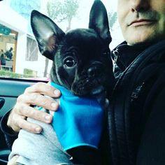 Que olhar....que olhar...#frenchbulldog #frenchiebulldog #buldoguefrances #marcopolo