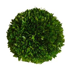 Preserved Boxwood Ball - 8 Inch