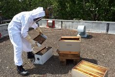 Getting started with rooftop beekeeping - Accomplishments of the Week - June 2018 Beekeeping, Rooftop, June, Projects, Blog, Log Projects, Blogging, Accounting
