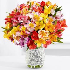 This abundant bouquet of alstroemeria, known as Peruvian lilies, will add vibrant color to any room. This colorful bouquet contains 25 stems of Peruvian Lilies, each stem with multiple blooms. To allow these beautiful flowers to last much longer, they are shipped fresh, budding, and ready to bloom.