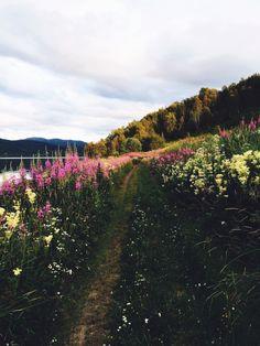 #nature #norway | camillastorjord