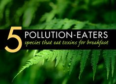 Bioremediation: 5 Species That Eat Pollution for Breakfast Heavy Metal Detox, Eco Architecture, Emergency Preparation, Air Pollution, Worlds Of Fun, Health And Safety, Permaculture, Ecology, Sustainability