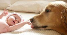 Perros protegiendo a sus bebés humanos ¡La cosa más tierna que verás hoy!