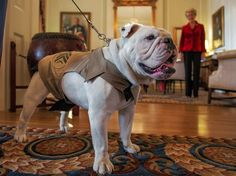 Holiday decorations at the Marine Corps commandant's home - The Washington Post - this Chesty, the Marine mascot