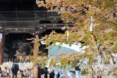 Oravanpesä: Japani 2013, Nagano, Zenkoji.