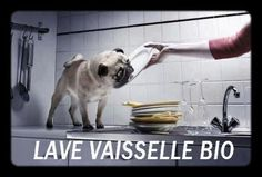 Pugs love to help with dishes. Funny Dogs, Funny Animals, Cute Animals, Animal Funnies, Amor Pug, Pug Mug, Pugs And Kisses, Conceptual Photography, Cute Pugs