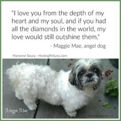 A Rainbow Blessing from Maggie Mae, the angel dog Maggie Mae, Pet Loss, Blessing, Angels, Rainbow, Dog, Pets, House, Loss Of Pet