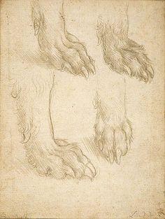 Studies of a Dog's Paw (c. 1490 - 1495) by Leonardo da Vinci via National Galleries of Scotland
