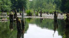"""Hubertlaki-tó  A Bakony Gyilkos-tavaként """"elhíresült"""" romantikus fekvésű Hubertlaki-tó a Sombereki-séd völgyében bújik meg, a Hamuházi-séd és a Szalai-séd találkozásánál."""