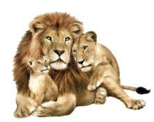Lion's