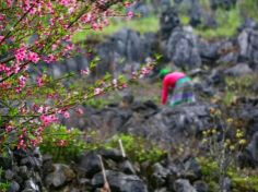Cẩm nang du lịch Hà Giang mùa đông