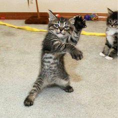 Voilà 8 preuves que vos chats sont en réalité… des ninjas ! - Page 2 - GogoBuzzy