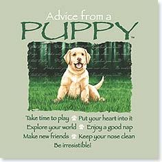 Dog And Puppies Happy .Dog And Puppies Happy Advice Quotes, Dog Quotes, Life Quotes, Wisdom Quotes, Asian Dogs, Animal Spirit Guides, Pomes, Animal Symbolism, Best Dog Training