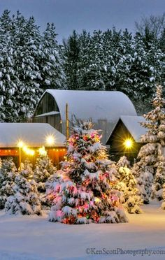Christmas Tree Farm, Leelanau County, Michigan - Looks like a Winter Wonderland!