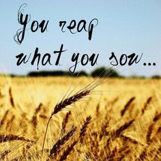 You reap what you sow...