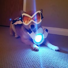 Bork bork love, the cavalry's here! Tracer from Overwatch