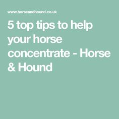 5 top tips to help your horse concentrate - Horse & Hound