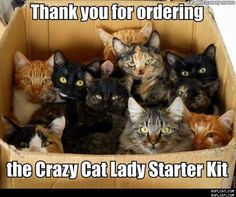 Crazy Cat Lady Starter Kit Photo:  This Photo was uploaded by Kiya-or-Delena. Find other Crazy Cat Lady Starter Kit pictures and photos or upload your ow...