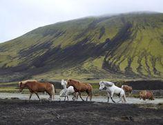 Razas propias, Islandia.