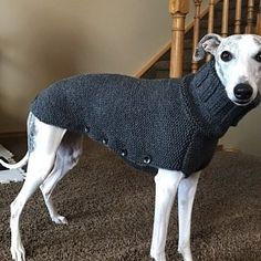 Dog clothes are not just a fashion accessory that will make your pet look more charming. Large Dogs, Small Dogs, Large Dog Sweaters, Dog Coat Pattern, Knit Dog Sweater, Dog Jacket, Dog Hoodie, Dog Coats, Whippet