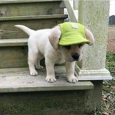 Puppy ball cap. So sweet.