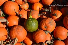 Pumpkin Patch #QuealysPhotography