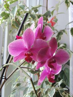 Beautiful Flowers, Indoor Plants, Beautiful Orchids, Plants, Garden Pictures, Rooftop Garden, Flowers, Planting Succulents, Native Plants