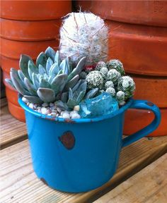 Vintage Enamel Ware Cactus/Succulent  Dripping Springs, Tx. Farmers Market