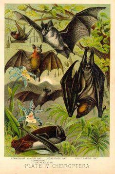 Vintage bat drawings.