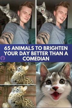 Amazing Facts, Just Amazing, Amazing Nature, Awesome, Animal Sayings, Animal Memes, Baby Kittens, Cute Cats And Kittens, Majestic Animals