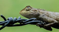 Garden lizard by Saima Jaman on Creative Market