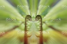 This image is an abstract image taken by me, coloured then reworked. Spiritual Practices, Abstract Images, Image Now, Surrealism, Mandala, Royalty Free Stock Photos, Creative, Nature, Backgrounds