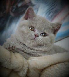 Beautiful Fur Baby.