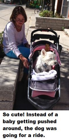 www.childrensyogabooks.com Wow!  Talk about getting pampered. I came across this lady who was taking her dog for a walk, in a baby carriage. The dog was adorable and as cute as a baby. :-)  Also really calm and just enjoying being in the moment.