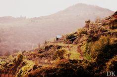 Vineyards, Krems, beautiful nature