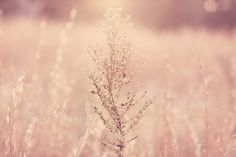 """Minimalist Nature Photography - """"Belle of the Ball"""" Pink Wall Art - Surreal Dreamy Muted Pink Art - Photograph 16x24 Reeds"""
